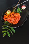 Autumn composition of apples and rowan Stock Photos