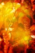 Red and Gold Color Background with Christmas Light Stock Photos