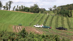 Farm Workers Picking Fruit in the Field Stock Footage