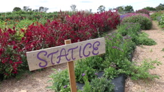 Wood Statice Sign in Flower Garden Stock Footage