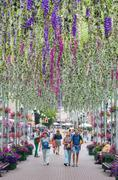 People walk along the avenue, adorned with flowers, hanging vertically Stock Photos