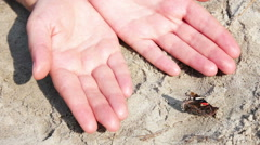 Red and black butterfly on the sand Stock Footage