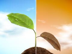 Comparison of seedling Stock Illustration