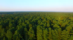 Aerial view of the vast pine taiga Stock Footage