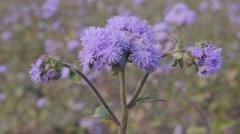 Flower field,Chitwan,National Park,Nepal Stock Footage