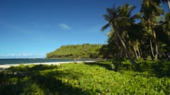 Moving closer to tropical beach with sand and green leafy vines, Philippines Stock Footage
