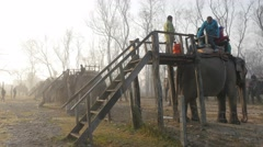 Tourists climbing off elephant after tour,Chitwan,National Park,Nepal Stock Footage