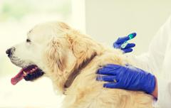 Close up of vet making vaccine to dog at clinic Stock Photos