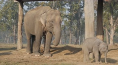 Mother elephant with baby,Chitwan,National Park,Nepal Stock Footage