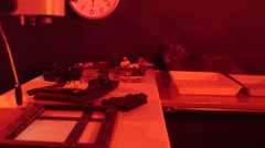 Cute cat in photography darkroom with red lighting Stock Footage