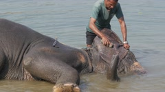 Elephant does not like washing in river,Chitwan,National Park,Nepal Stock Footage