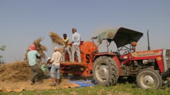 Mustard seed harvesting,Chitwan,National Park,Nepal Stock Footage