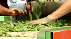 Processing of gherkins Stock Footage
