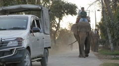 Elephant drivers returning home after work,Chitwan,National Park,Nepal Stock Footage