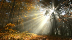 Majestic sunrays in a misty autumn forest Stock Footage