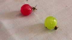 Wasps are sitting on candies Stock Footage