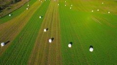 Aerial landscape, flight over agricultural fields with rolls of hay packed. Stock Footage