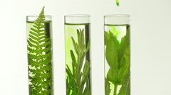 Laboratory, Fern, lavender, rosemary and mint in test tubes Stock Footage