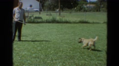 1968: a dog is seen jumping SILVER CITY, NEVADA Stock Footage