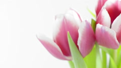 Tulip flower bouquet with slow sliding motion Stock Footage