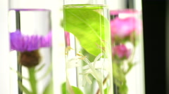 Laboratory, Pink, honeysuckle, thistle and dandelion in test tubes Stock Footage