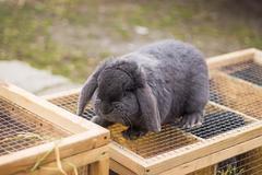 Rabbit in a Cage Kuvituskuvat