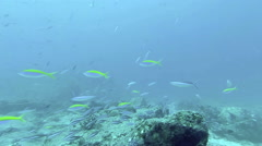 Coral reef and tropical fish at Seychelles, Indian Ocean Stock Footage