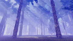 Sunbeams in magic foggy pine forest 4K Stock Footage