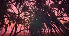Beautiful vivid sky and tropical plants silhouettes on exotic Sri Lanka beach Stock Footage