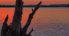 Tranquil nature background of dead tree and calm water ripples on river shore Stock Footage