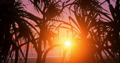 Bright sunset sun shines through palm trees leaves on sea cost in Sri Lanka Stock Footage