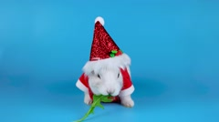 Funny white rabbit wearing Santa costume and eating arugula salad Stock Footage
