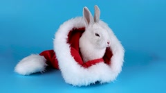 Fluffy white rabbit sitting and sniffing in a Santas hat Stock Footage