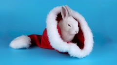 Funny bunny washing his face in the Santa Claus hat, on blue chroma key Stock Footage
