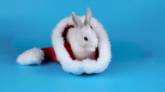 Cute rabbit in a Santa hat sits and relaxing Stock Footage
