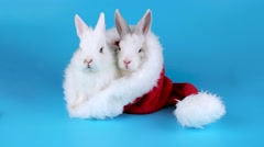 Christmas couple rabbits sitting in the Santa Claus hat, ready to keying Stock Footage