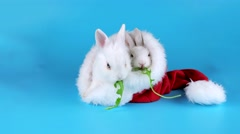 Two funny rabbits eating arugula salad in the Santa Claus hat, ready to be keyed Stock Footage