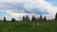 Green Grass,Yellow Flowers and Fir Trees on a Cloudy Day Stock Footage
