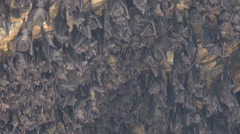 4k Bats close up hanging at the wall of Indonesia holy bat temple Goa Lawah Stock Footage
