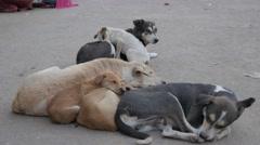 Dogs sleeping on street,Varanasi,India Stock Footage