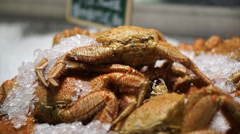 Shanghai Hairy crab and other kind iced for sell in fish market Stock Footage