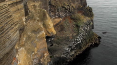 Sandstone cliff with seagull nests in Western Iceland Stock Footage