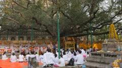 Pilgrims in white praying under Bodhi tree,BodhGaya,Mahabodhi Temple Stock Footage