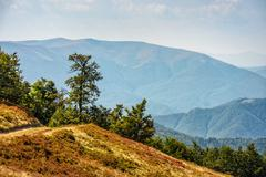 Path through hill side meadow in Carpathians Stock Photos