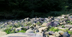Butterfly on a mountain river stones Stock Footage