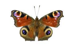 Aglais io butterfly isolated Stock Photos