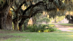 Plantation row in old Southern Plantation in the American deep south Stock Footage
