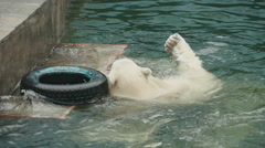 Polar bears at the zoo Stock Footage