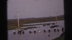 1962: a dozen women labor in the rivers, collecting drinkable water standing Stock Footage