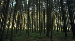 Looking through forest trees to a sunlit clearing. RAW video record Stock Footage